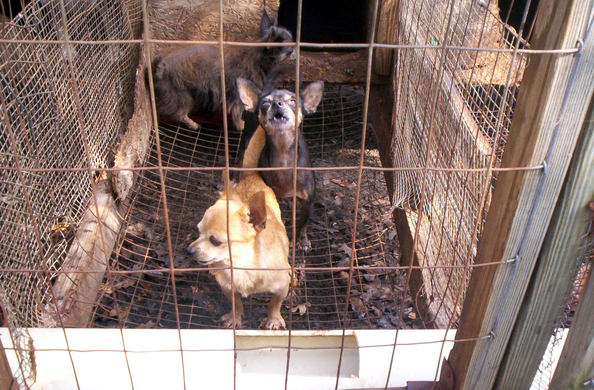 Pledge to End Puppy Mills